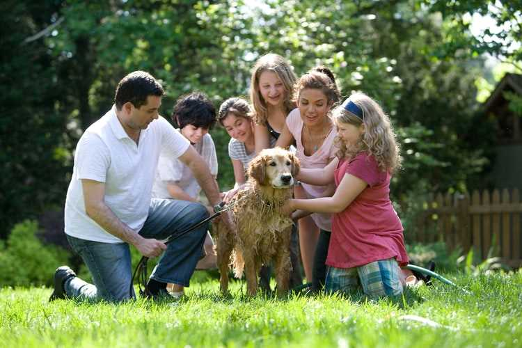 Describe a Family which You Like and are Happy to Know